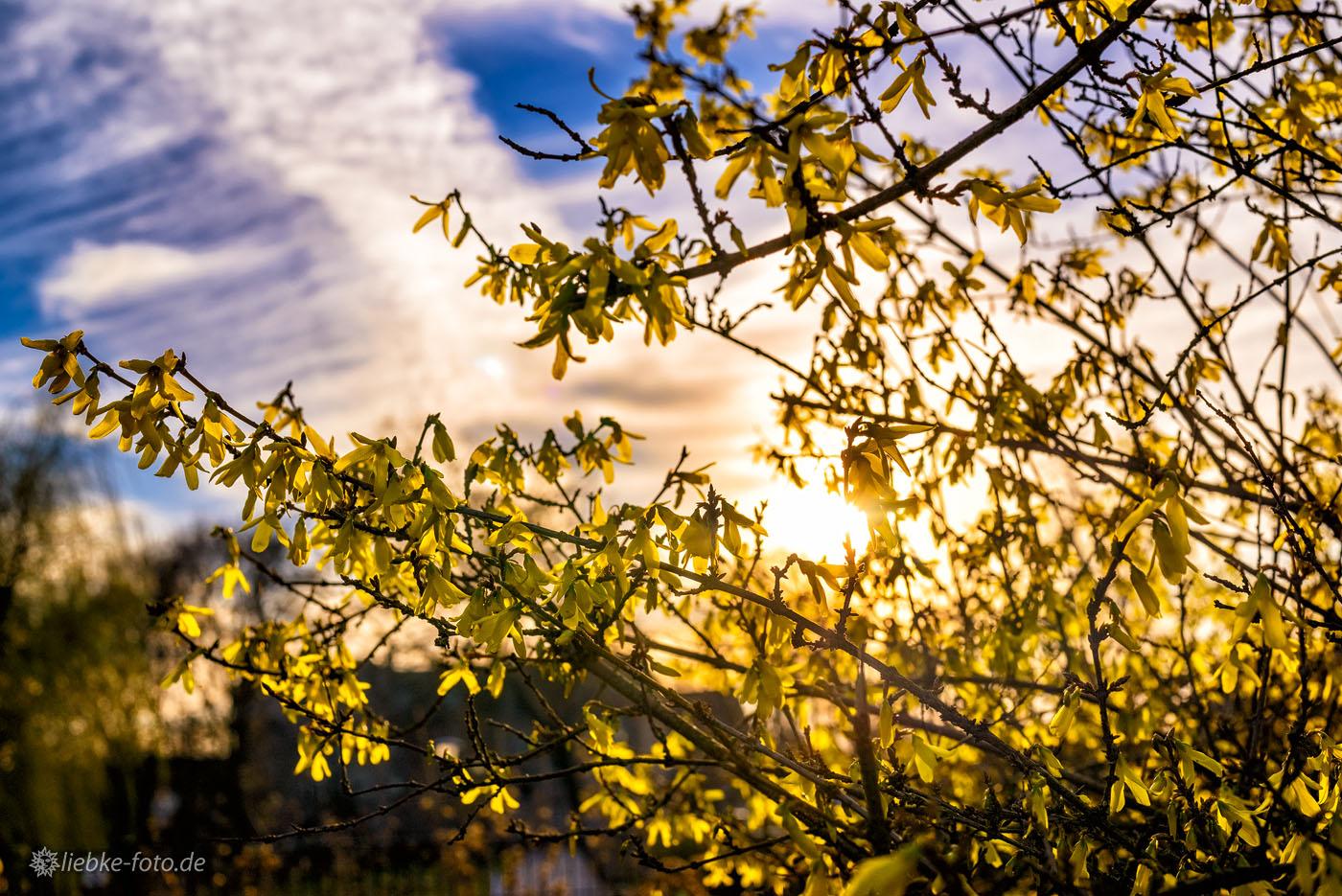 Frühblüher im Märkischen Licht