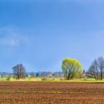 Blick auf Wensickendorf