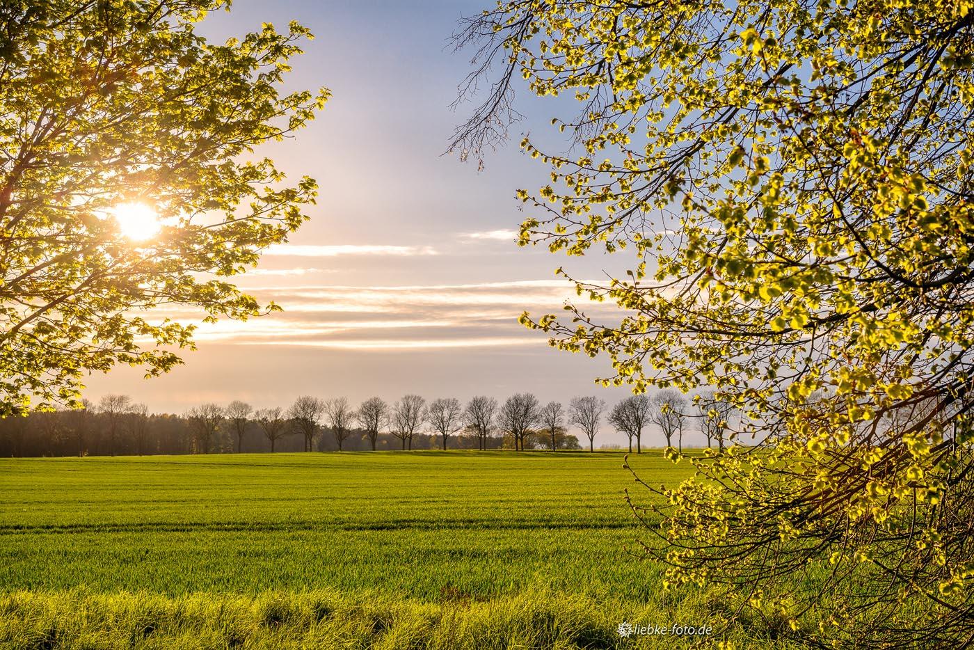 Das warme Märkische Licht der Abendsonne über das nun friedliche Feld