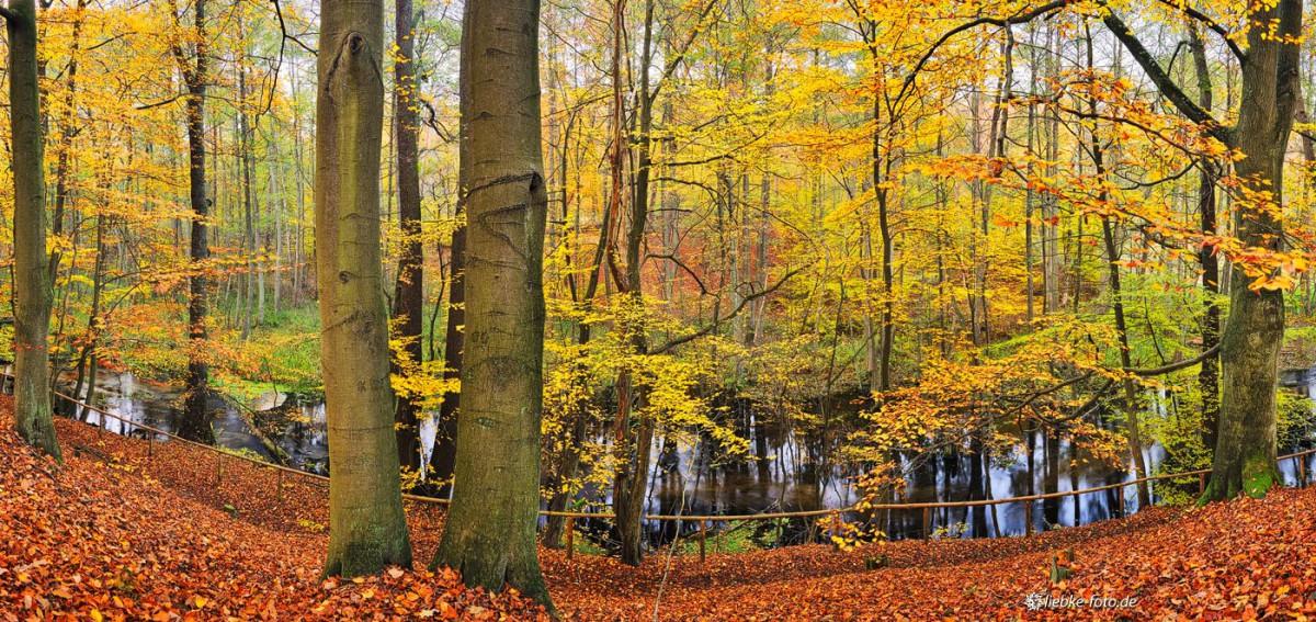 Goldenes Briesetal im Herbst, hier in der Nähe von OT Briese
