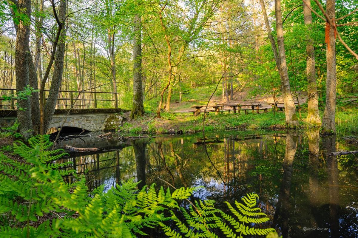 Das Briesetal im Naturpark Barnim - Hubertusbrücke