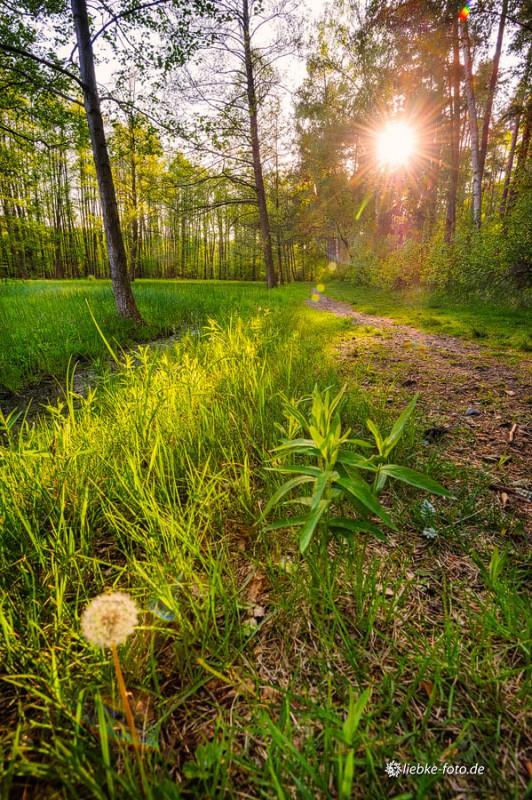 Das Briesetal im Naturpark Barnim - Weg von der Hubertusbrücke nach Briese
