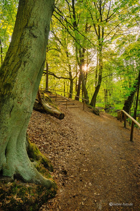 Das Briesetal im Naturpark Barnim - Einstieg bei Briese