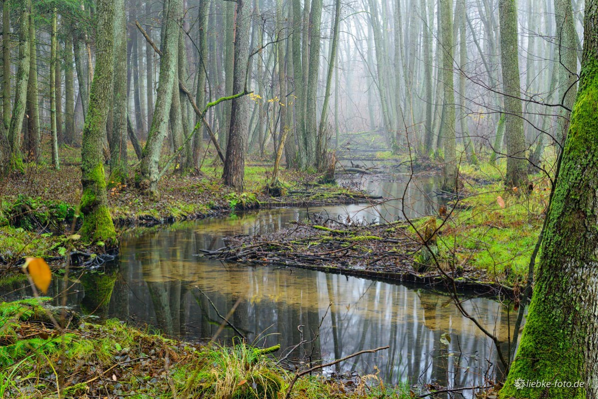 Das Briesetal im Naturpark Barnim - Spätherbst