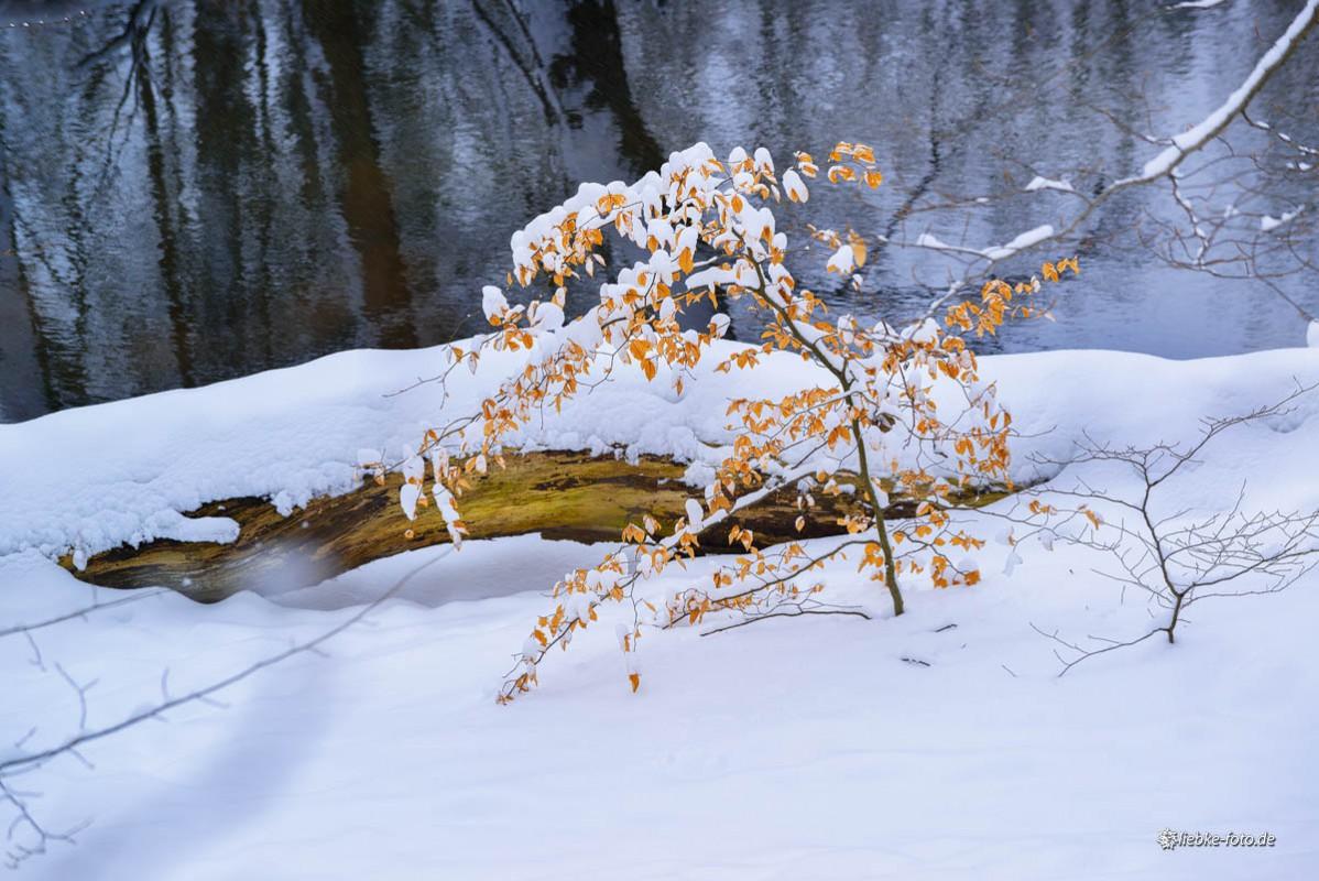 Das Briesetal im Naturpark Barnim - Ein Wintermärchen