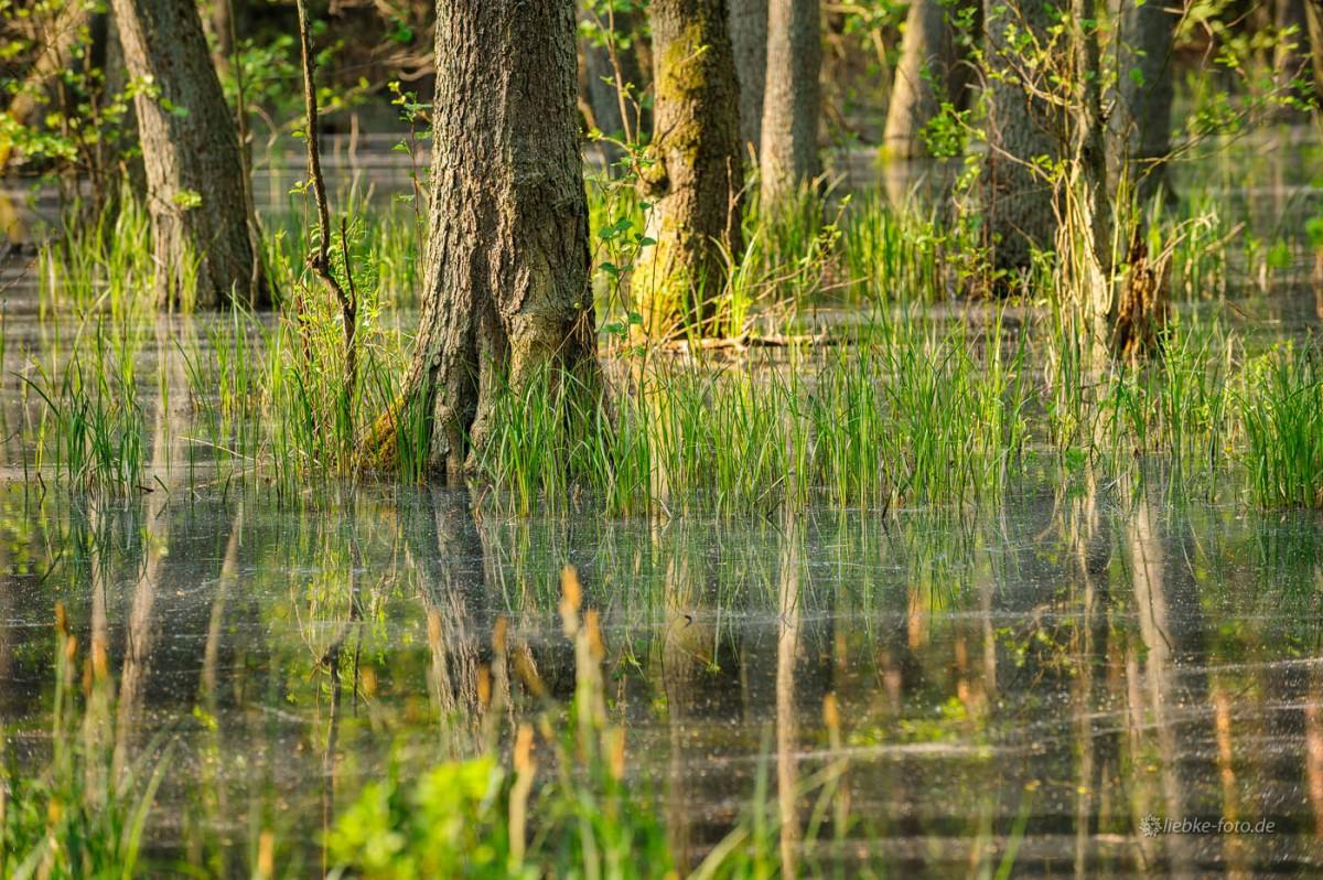 Das Briesetal im Naturpark Barnim - Wildes Brandenburg