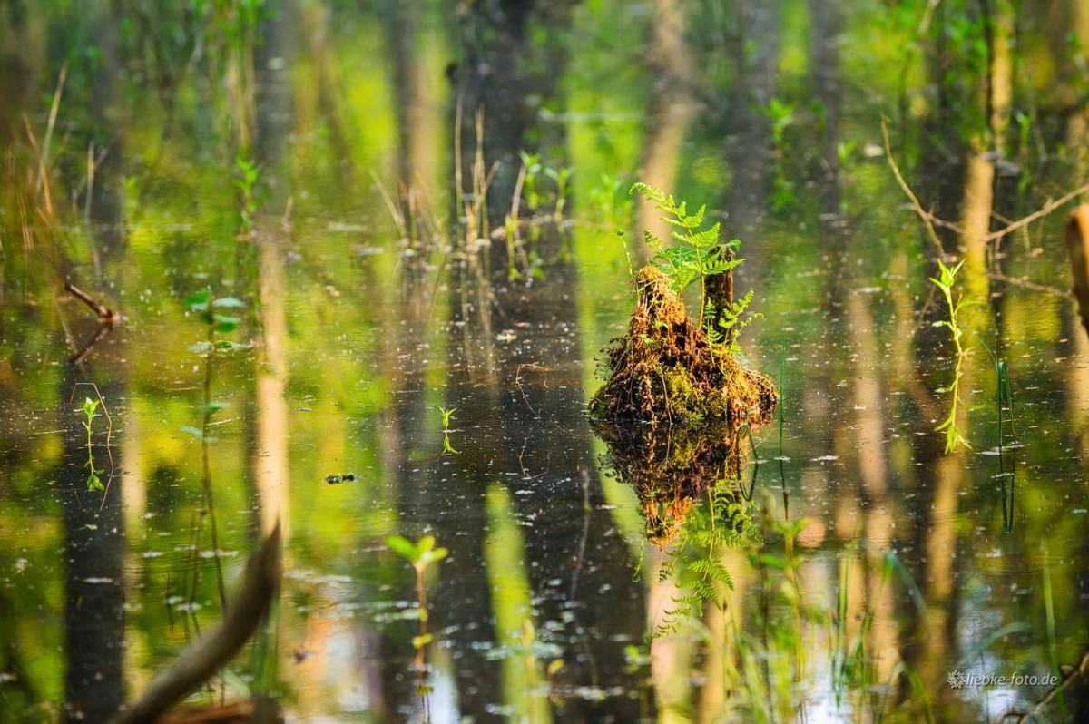 Das Briesetal im Naturpark Barnim - In einem Land vor unserer Zeit