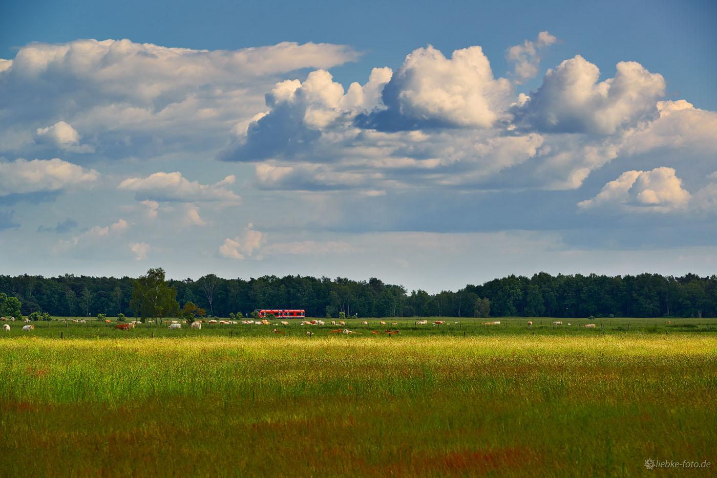Wolken, Landschaft, Kühe und der Regio spielt Farbklecks