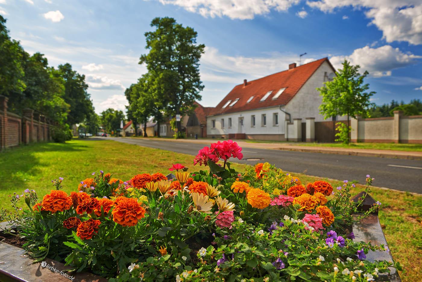 Farbiges Sommerfeld im Kremmener Land