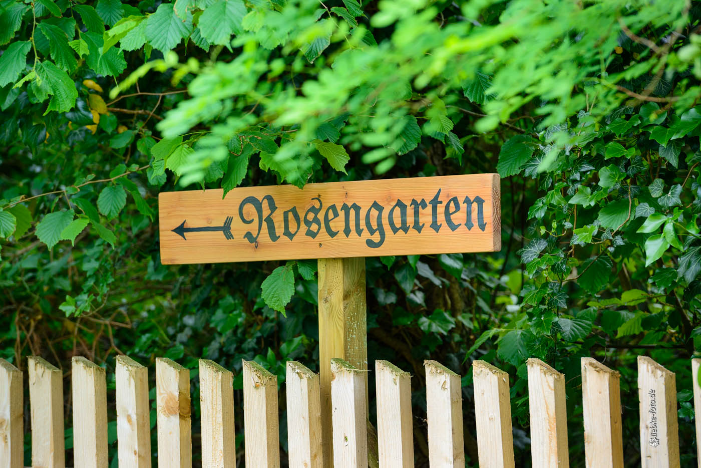Zum Internet-Rosengarten