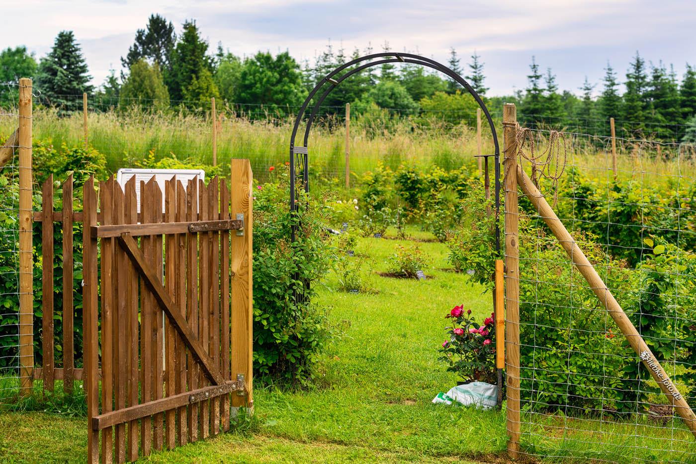 Eingangspforte, Hecke und Rosenbogen vom Garten