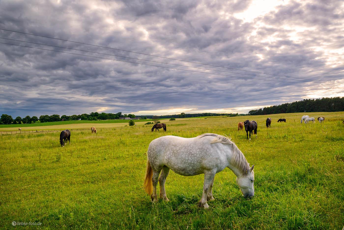 ...auf der Weide habe ich ihre Pferde gesehen.