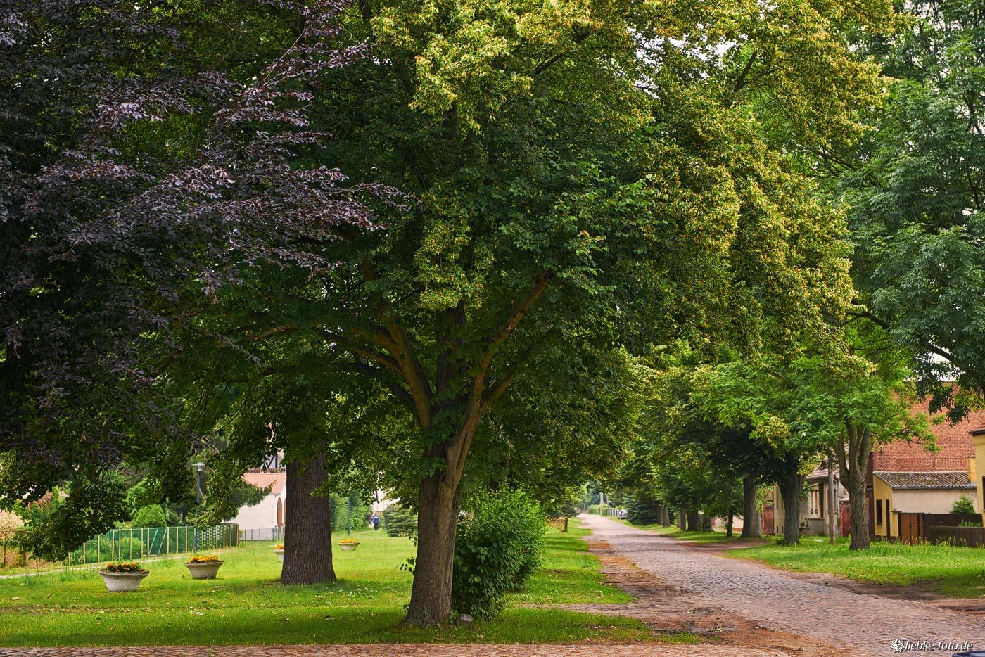 Typisch für die märkischen Dörfer und schön anzusehen; Dorfstraße in Staffelde