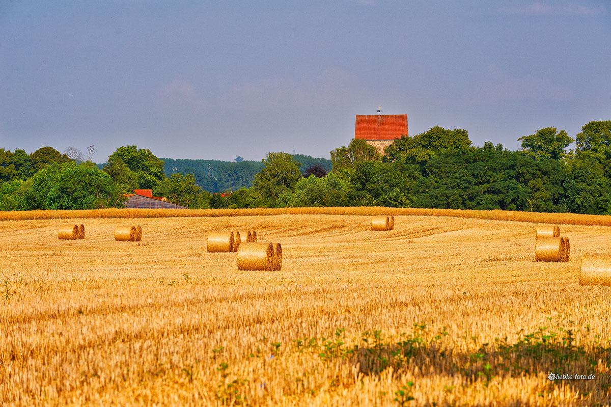 Getreideernte vor Gutengermendorf, Oberhavel
