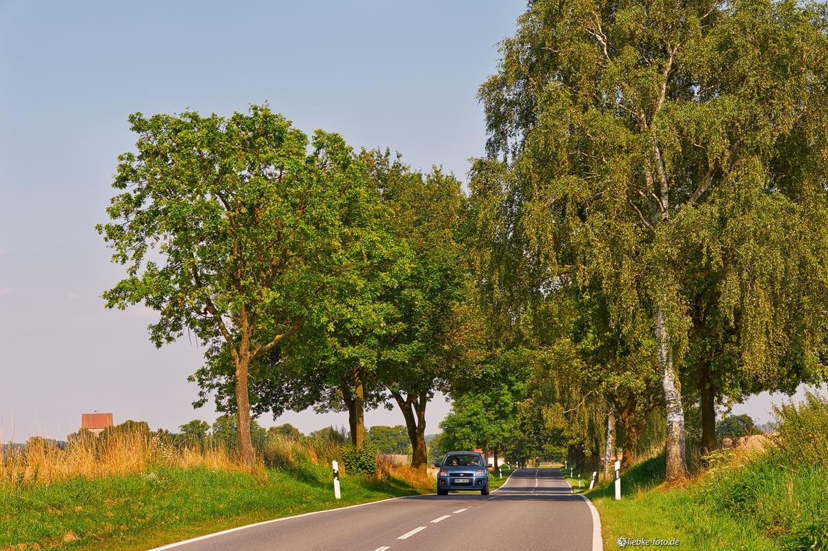 Allee Richtung Gutengermendorf, Oberhavel