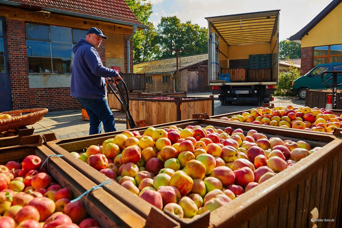 Per LKW werden Äpfel aus der näheren Region zum Pressen geholt
