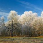 Schlosspark Ziethen, Nikon D200, RAW