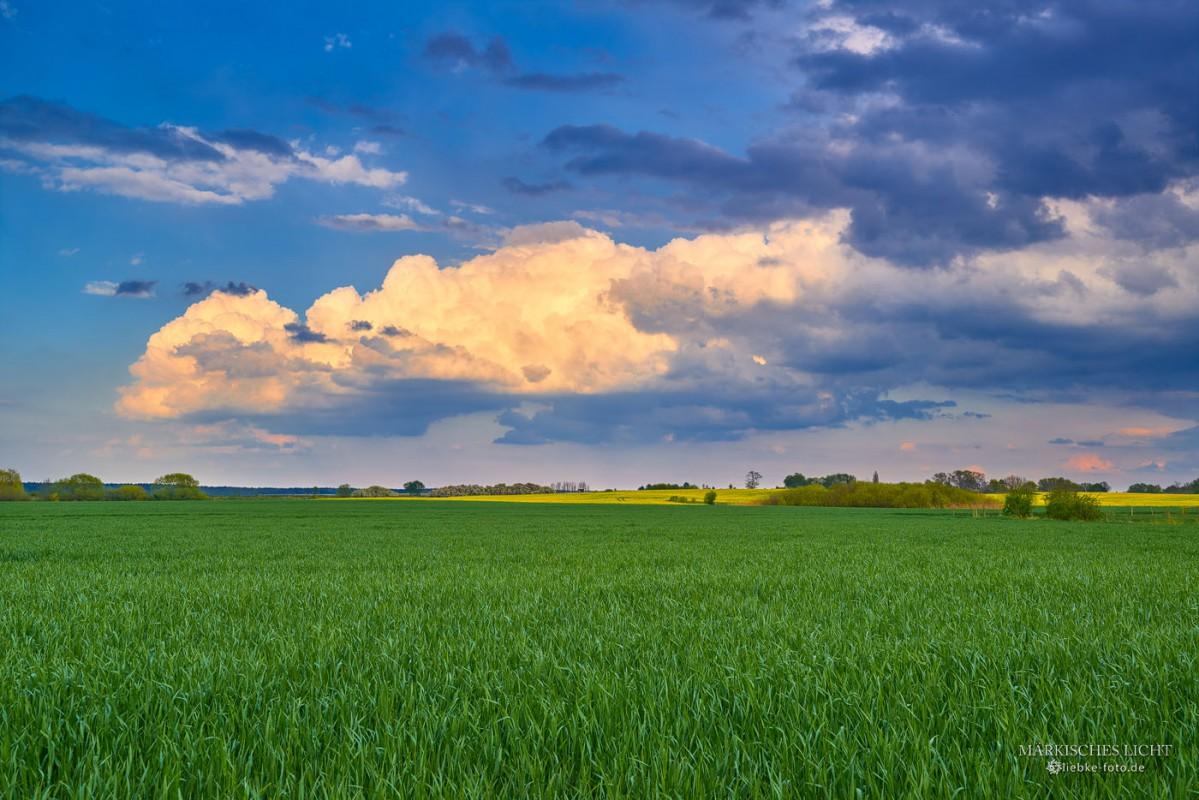 Saatgrün, Rapsgelb und ein phantastischer Himmel bei Vehlefanz, so ist Brandenburg