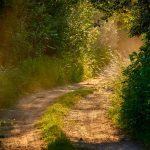 Feldweg im romantischen Licht