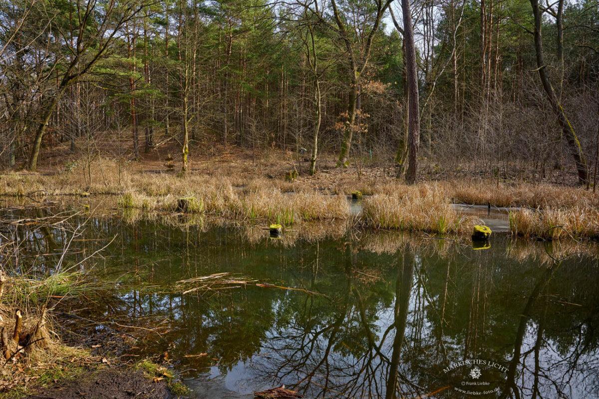 Das Briesetal im Naturpark Barnim