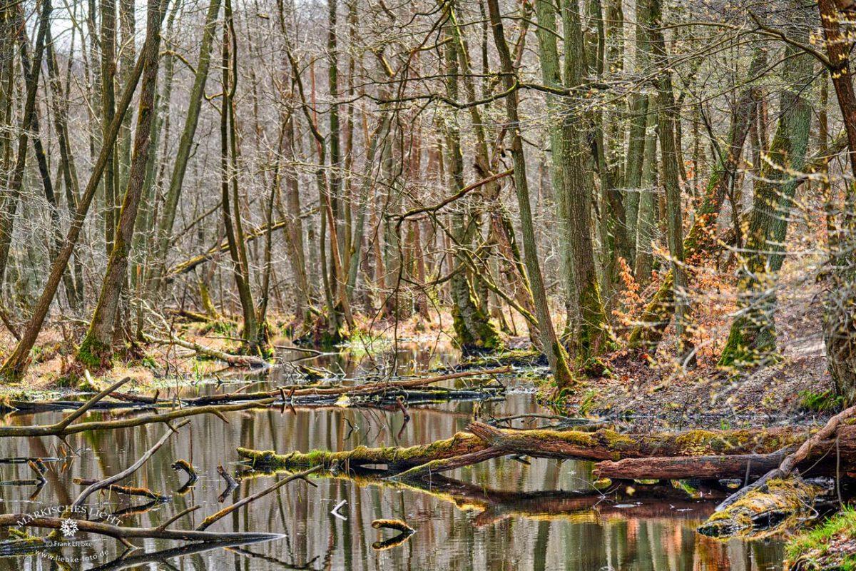 Briesetal-Frühling, Briesetal im Naturpark Barnim