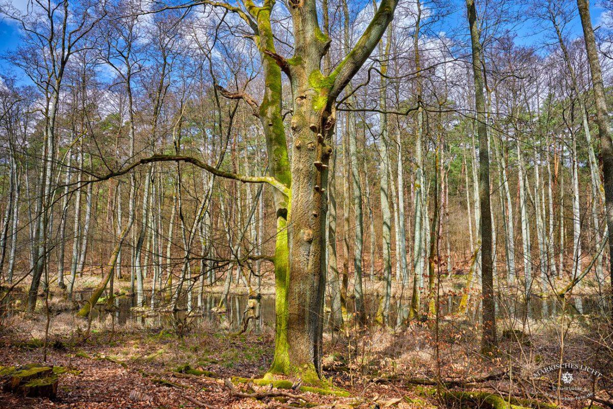 Briesetal im Naturpark Barnim
