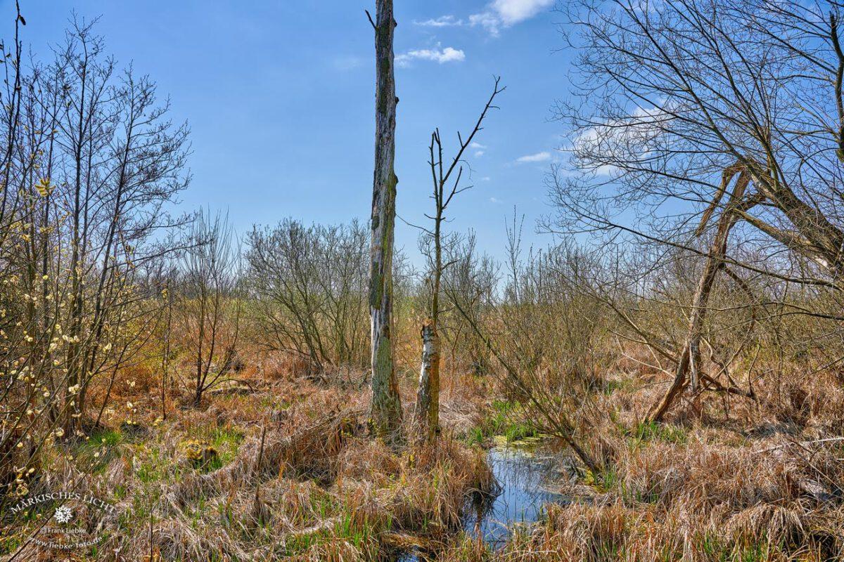 Die Eichwerder Moorwiesen