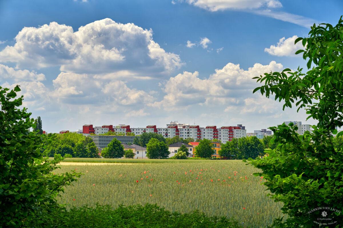 Blick von den Lübarser Höhe ins Märkische Viertel von Berlin