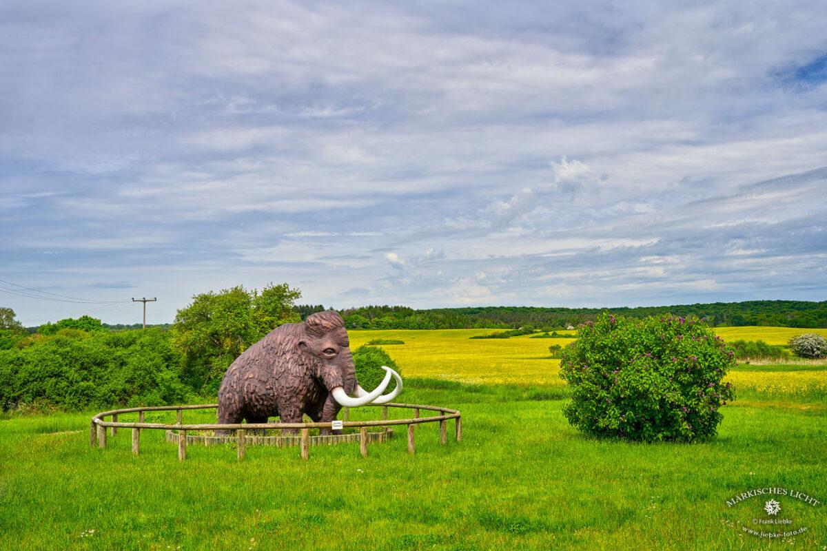 Das Mammut in Groß Ziethen