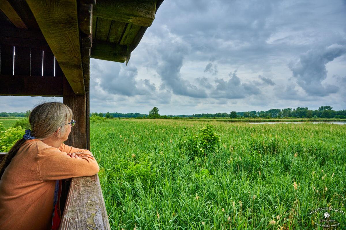 So wie Lucy kann jeder Naturfreund einen kleinen Teil des Linumer Teichlands vom Beobachtungsturm aus erleben