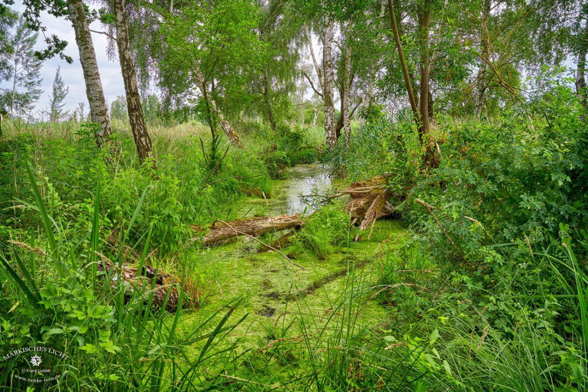 Unendliches Grün, Seen, Fließe..., und wir sind nicht am Amazonas sondern in Linum, mitten in der schönen Mark Brandenburg :D