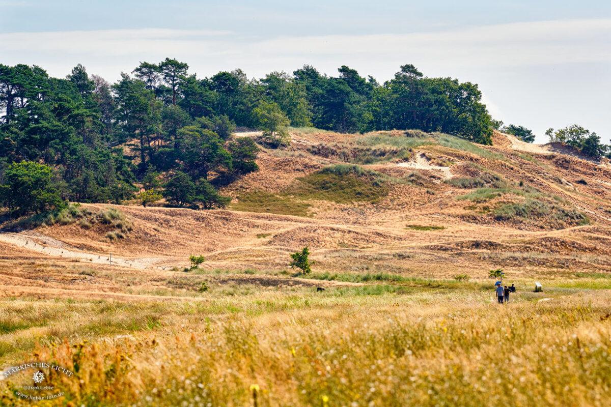 Das Naturschutzgebiet Binnendünen in Mecklenburg Vorpommern bei Klein Schmölen