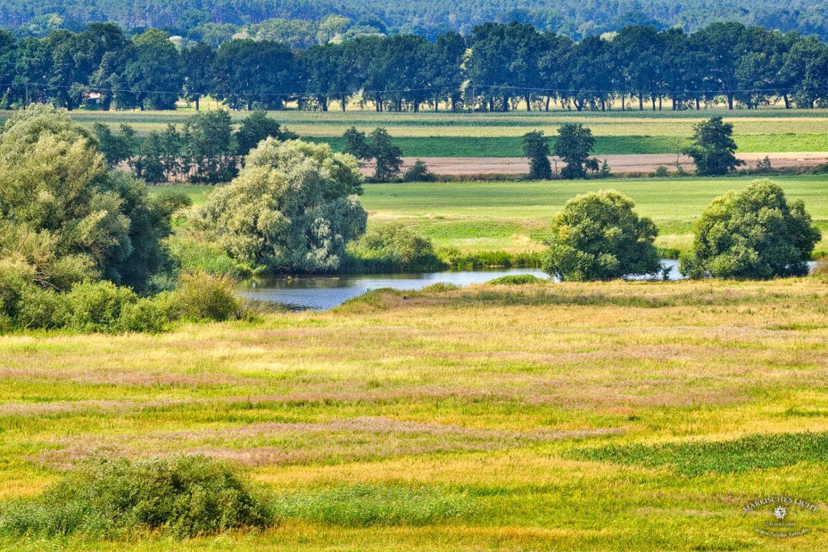 Das Naturschutzgebiet Binnendünen in Mecklenburg Vorpommern bei Klein Schmölen.