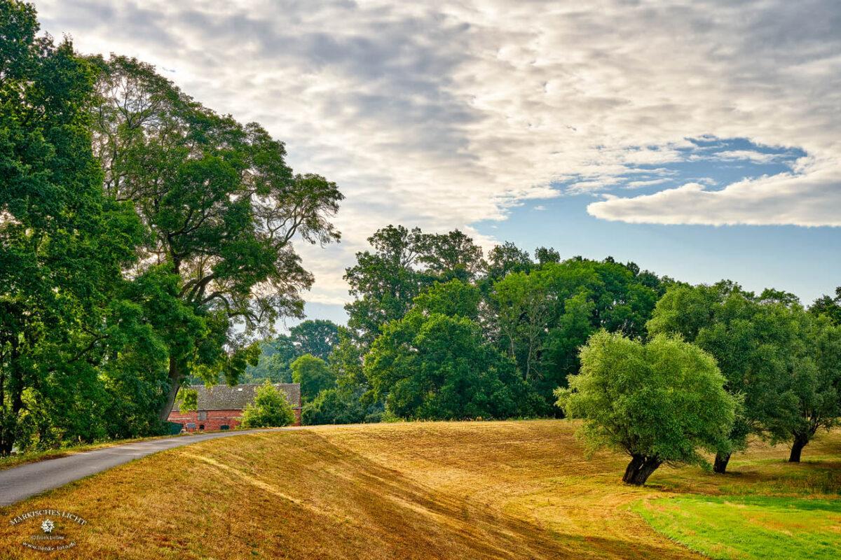 Im goldigen Morgenlicht zeigt sich die Lenzerwische am Elbedeich