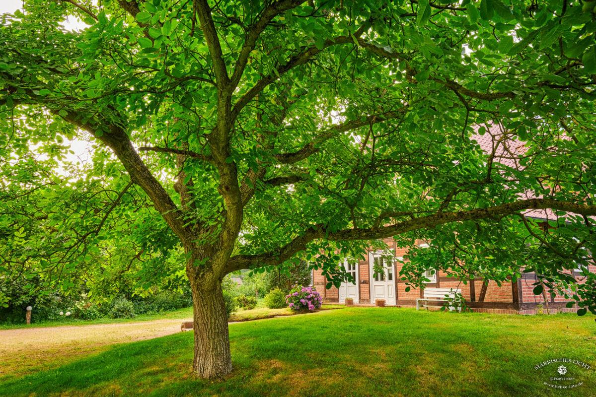Landhaus Elbeflair in der Lenzerwische, Gut überdacht vom prächtigen Nussbaum am Eingang