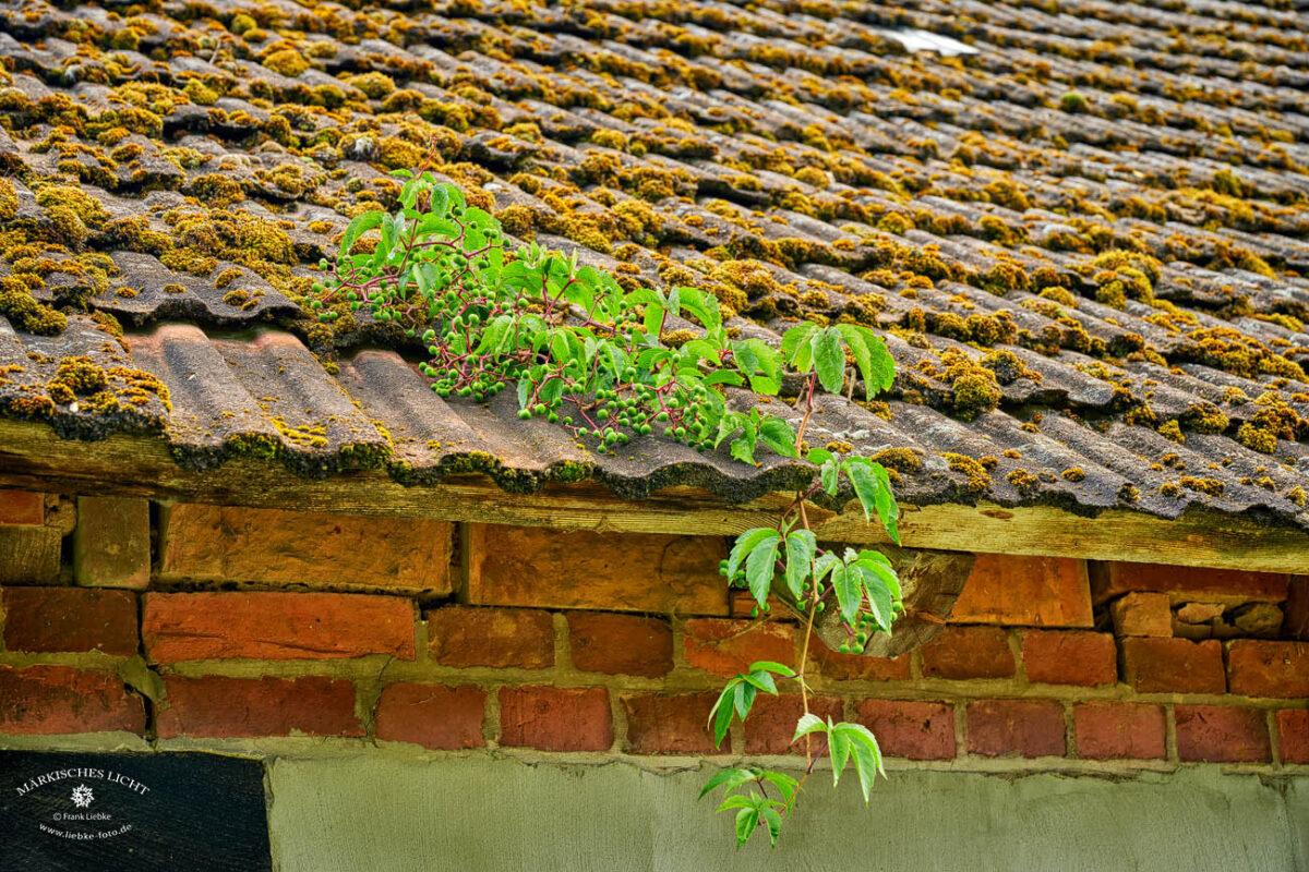 Landhaus Elbeflair in der Lenzerwische, Liebevolle Details überall