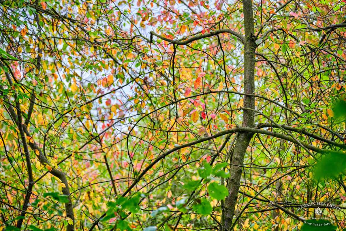 Buntes Laub, Eichwerder Moorwiesen, Lübars, Naturpark Barnim,