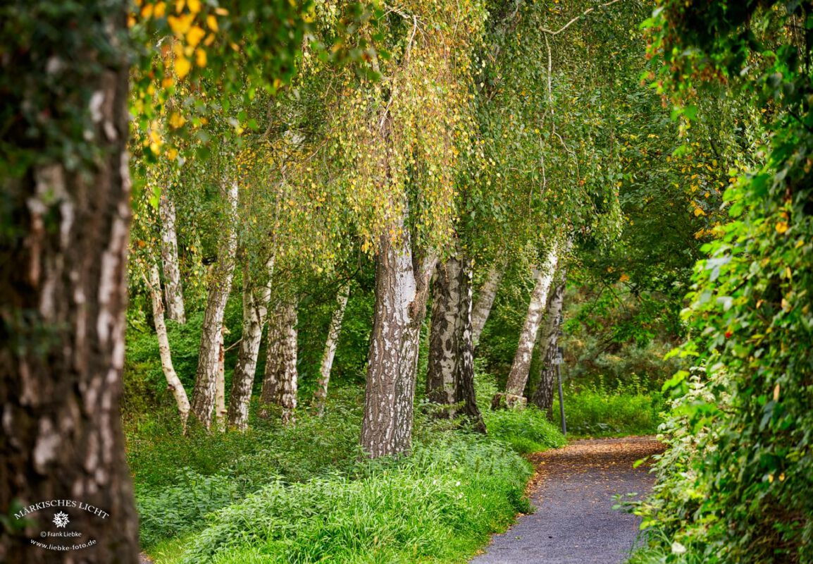 Ein herbstlicher Weg in den Eichwerder Moorwiesen im Naturpark Barnim bei Lübars.