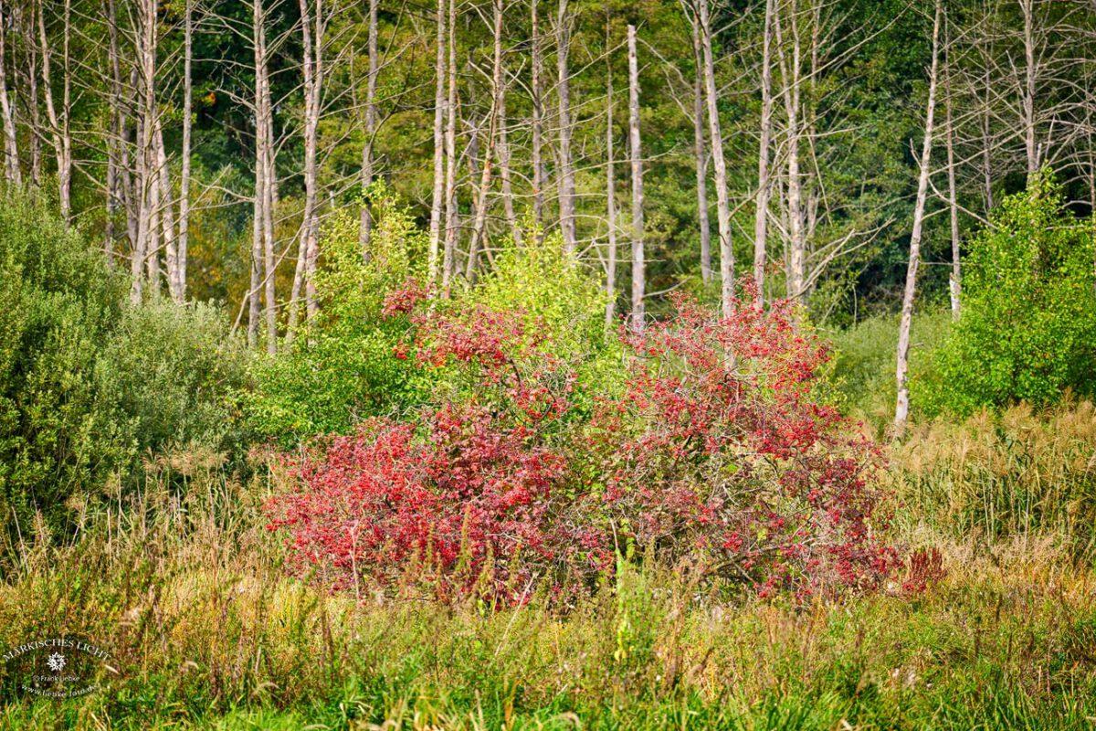 Eichwerder Moorwiesen im Naturpark Barnim bei Lübars.