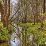 Frühling in Storkow